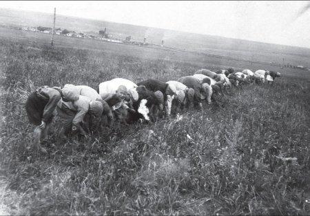 Колхозы